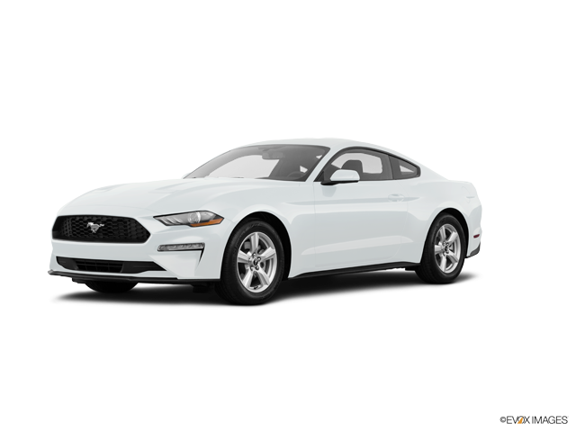 New 2019 Ford Mustang in Tampa, FL